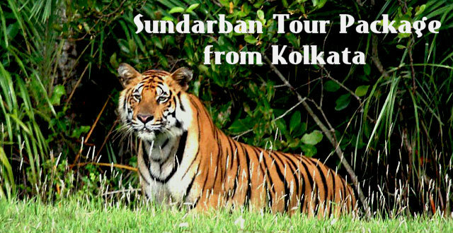 Incredible Facts of sundarban