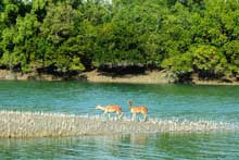 activities at Sundarban