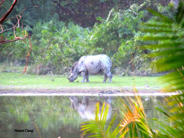 North East Kaziranga Forest