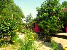 Resort at Bhitarkanika Rooms