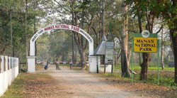 Manas National Park Tour Packages