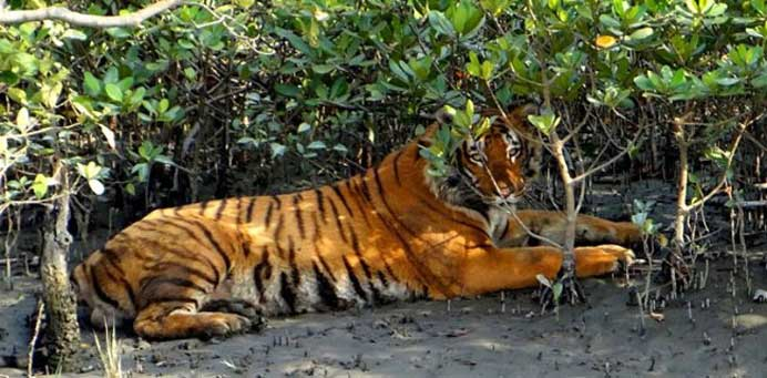 Sundarban Package Tour from Kolkata